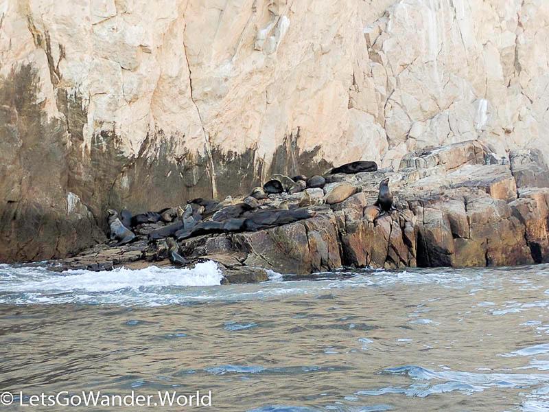 Sea lion colony near the arch