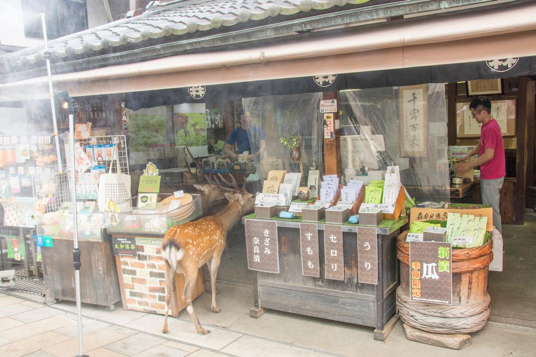 Shopping Deer in Nara