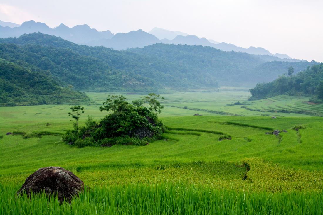 Rice fields in northern Vietnam