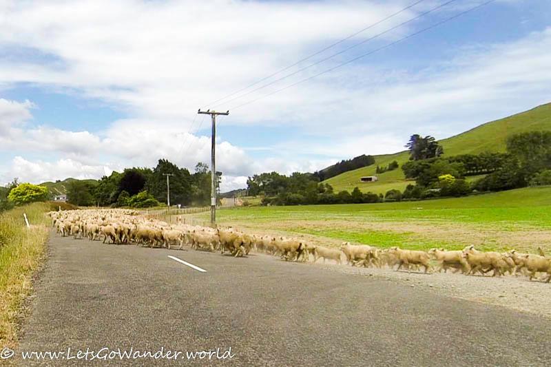 Road block ahead!